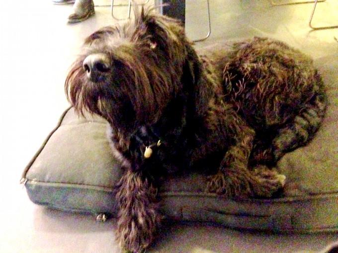 Ronja the dog