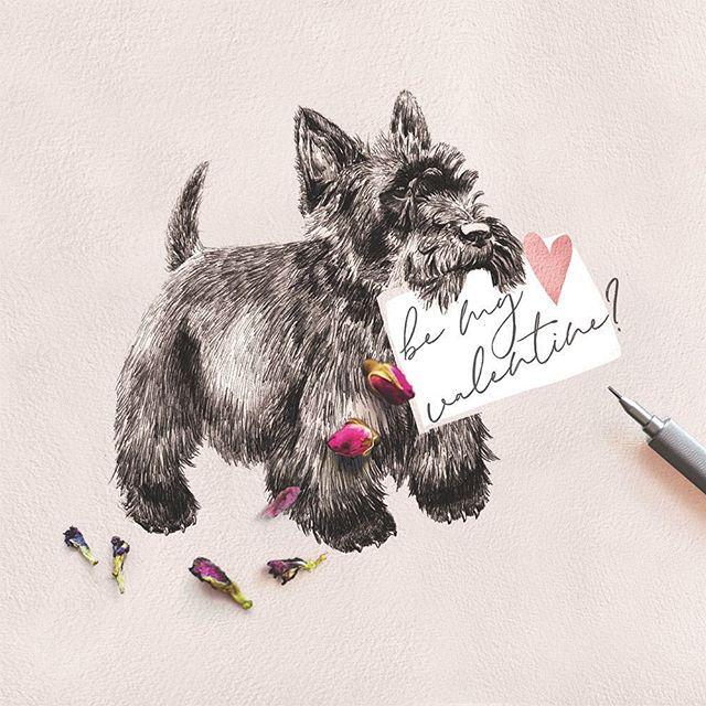 Happy Valentine's Day everyone! ♥️💕#valentines #scottie #scottiedog #cairnterrier #dog #illustration #art #greetingcards #sketch #dogsketch #scottishterrier #doglovers