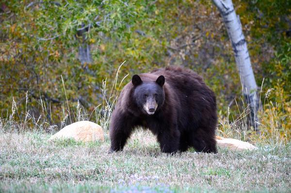 20120925__wildlife_012-p1.jpg