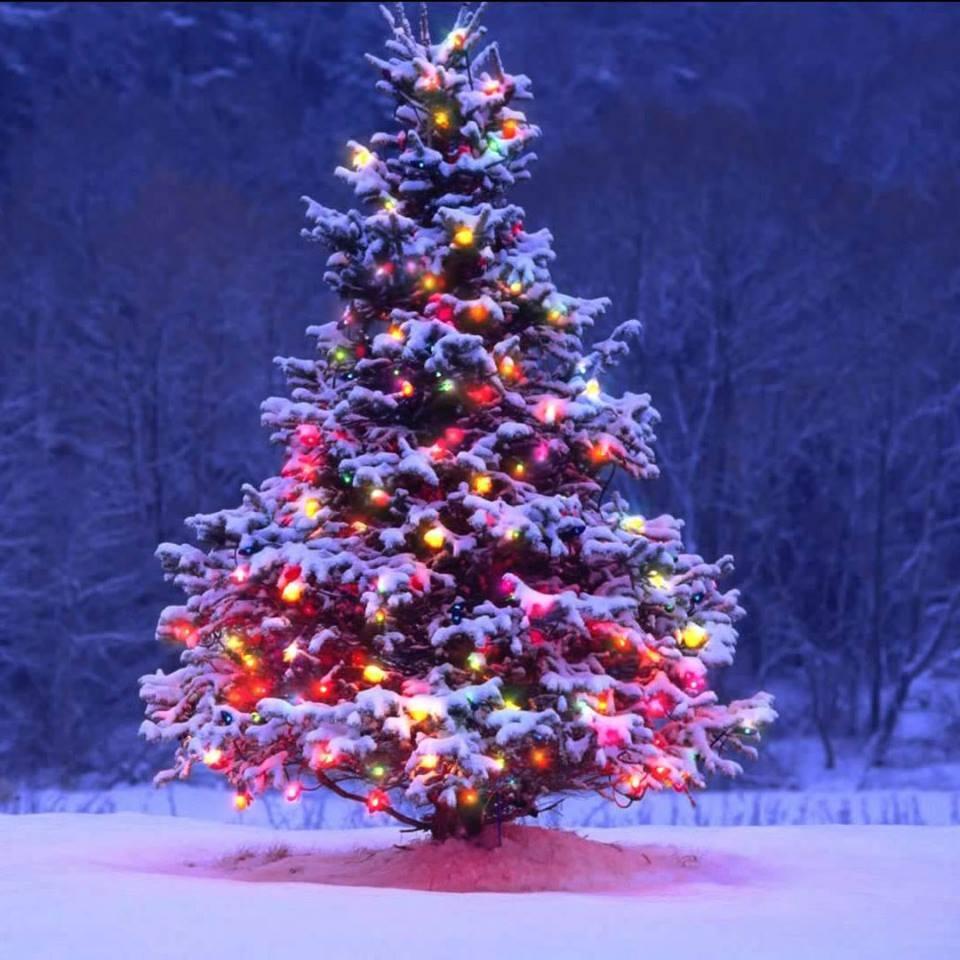 Christmas+Tree+2018+in+snow.jpg