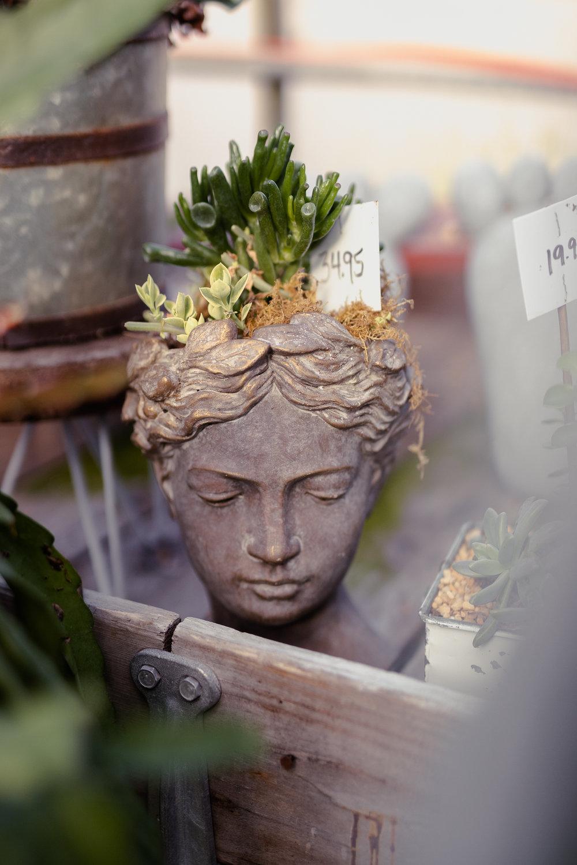 York_Greenhouse_Plants_Garden_Hueters-3.jpg