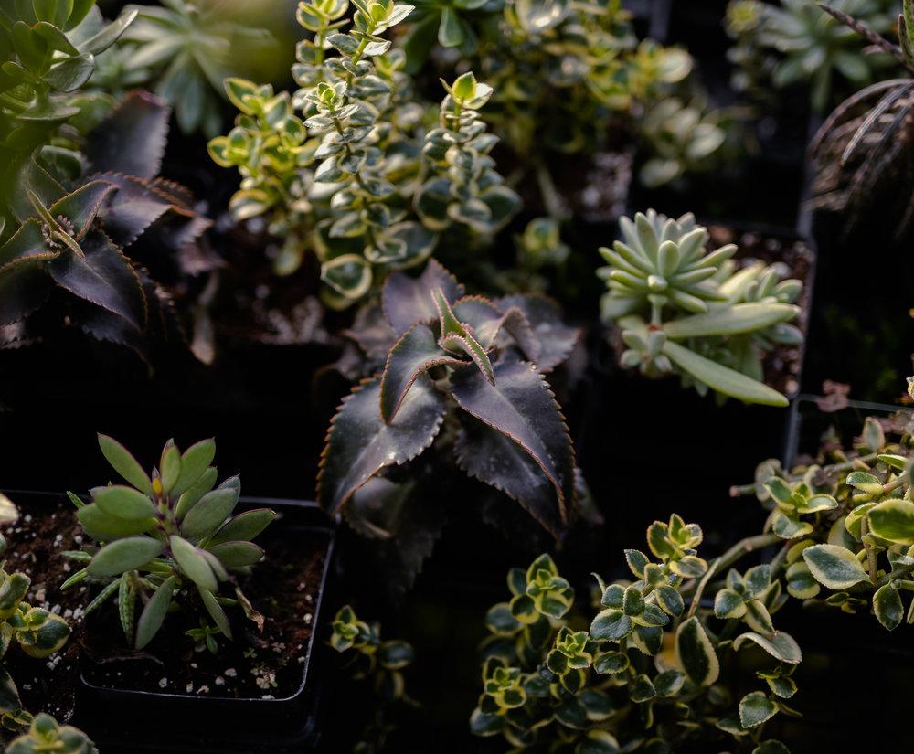 York_Greenhouse_Plants_Garden_Hueters-18.jpg