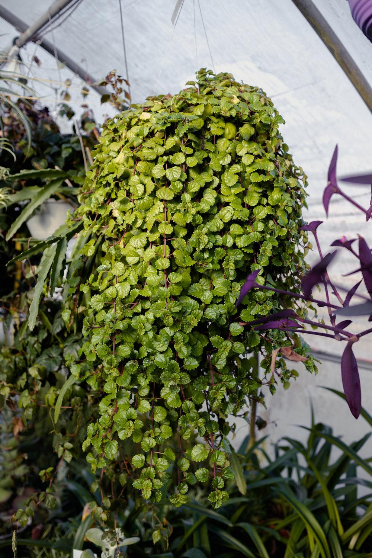 York_Greenhouse_Plants_Garden_Hueters-21.jpg