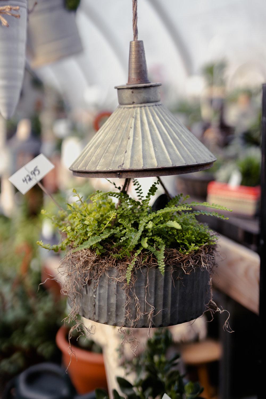 York_Greenhouse_Plants_Garden_Hueters-20.jpg