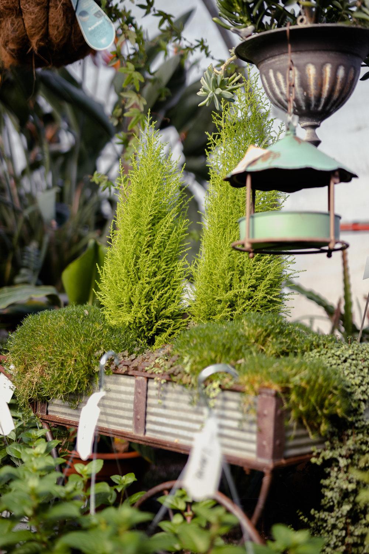 York_Greenhouse_Plants_Garden_Hueters-24.jpg