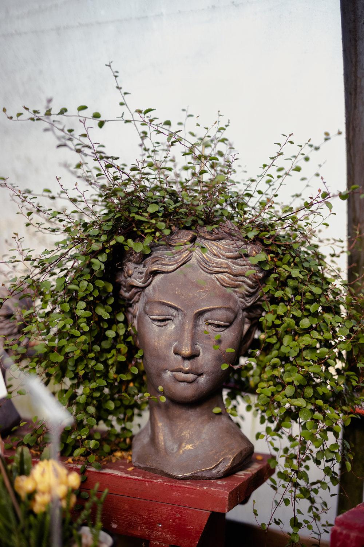 York_Greenhouse_Plants_Garden_Hueters-4.jpg