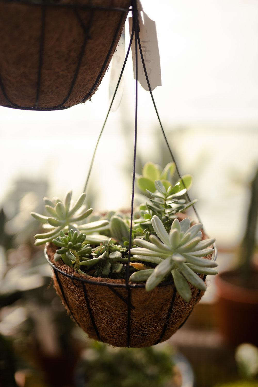 York_Greenhouse_Plants_Garden_Hueters-25.jpg