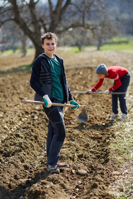 Sowingpotatoes.jpg
