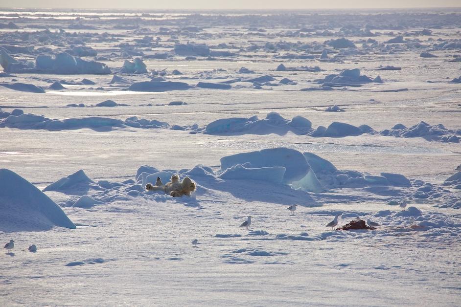 Arktiske billeder Naturen på grønland Naturen på island