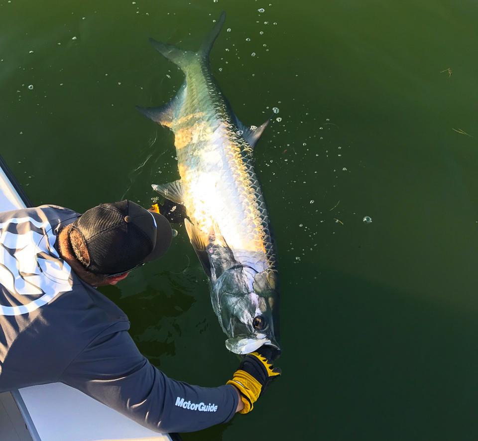 tarpon-fishing-florida-best-guide-premier-charter.jpg