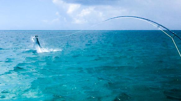 catch-tarpon-fly-fishing-treasure-coast-flyfishing-snook.jpg