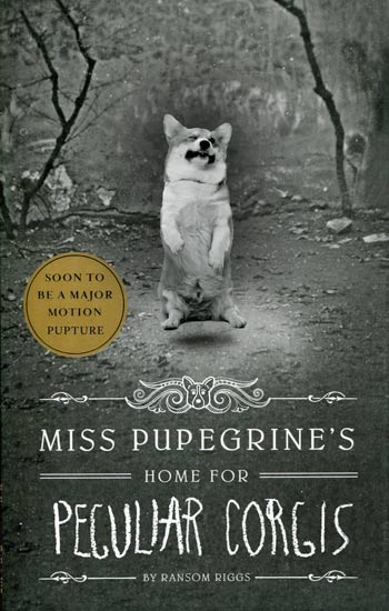 Miss Peregrine Corgi