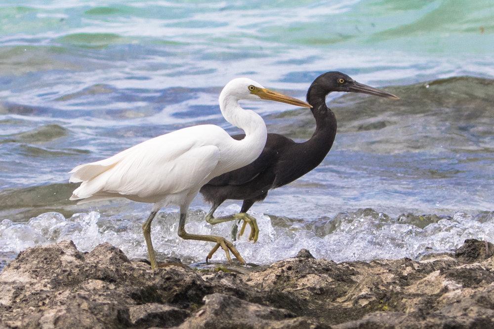 australianbirds (15 of 18).jpg
