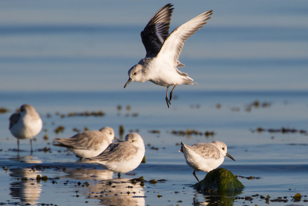 octbirds (5 of 20).jpg
