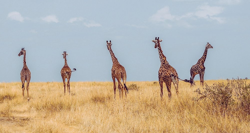 Dream-Maker-Travel-Kenya-Tanzania-Header-Banner.jpg