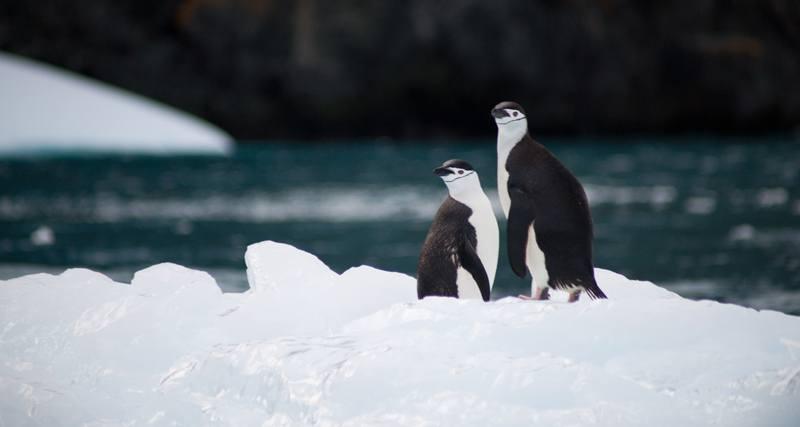 Dream-Maker-Travel-Ultimate-Antarctica-800px.jpg