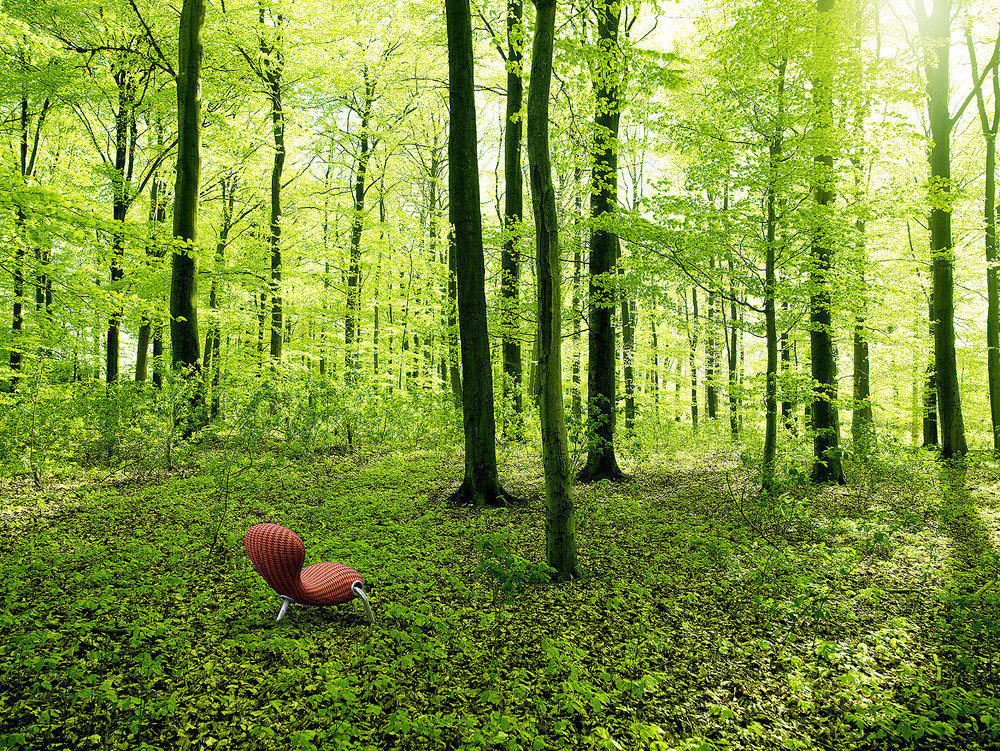 Wald_offen2_zu.jpg