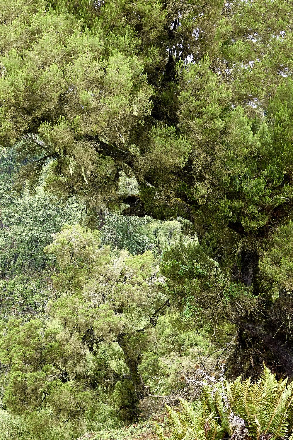 Ethiopia_Bale_Mountains_National Park.jpg