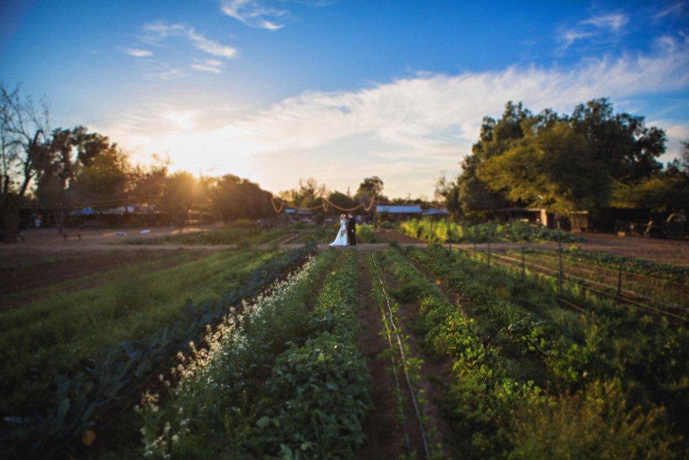 weddings-thefarm-19.jpg