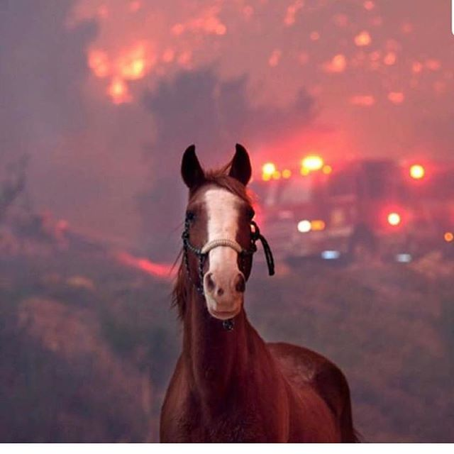 75k+acres burned, lives lost, 150+ homes lost, hundreds of thousands of people (and animals) displaced from T.O. to #Malibu to #Calabasas. And this is just #Southern #California. Northern Cal has its own deadly fire to fight. This so heartbreaking for so many in the #ThousandOaks community that just lost 12 people in the shooting.  Please donate food, supplies etc if you can and please keep all these people in your prayers. 🙏🏼♥️