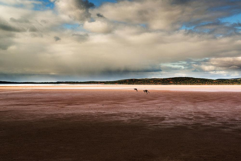 Roos on the Salt Flats