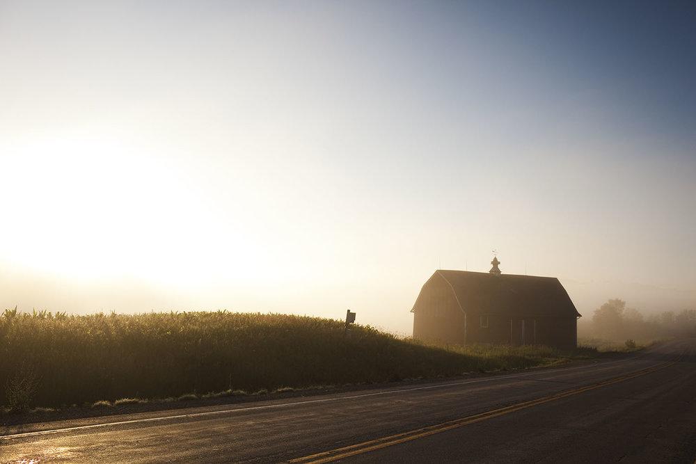Cornfield in the Driftless, Wisconsin