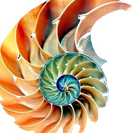The Nautilus begins life within a tiny shell, protecting the animal inside. As it outgrows the chamber, it develops and moves into a new, larger one. This growth and protection process continues throughout its life.
