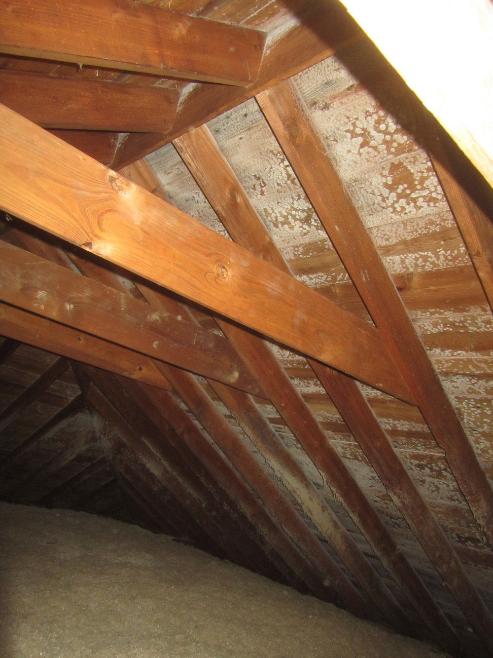 Evidence of mold growth at attic framing.