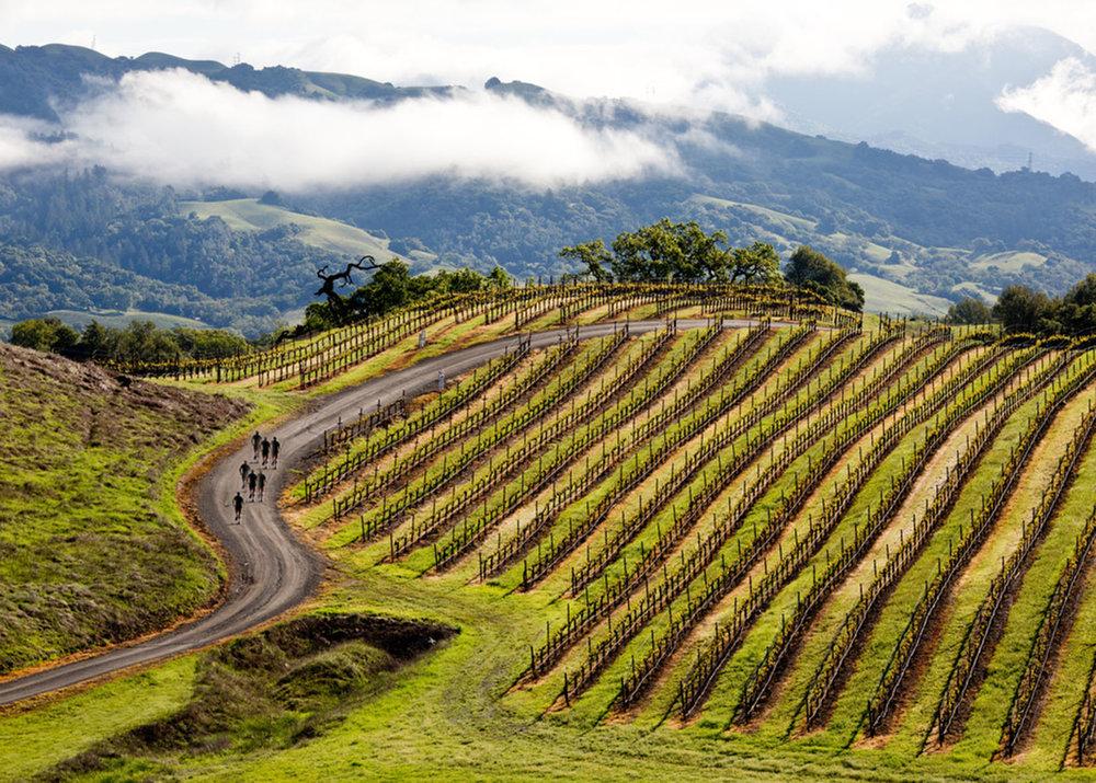 jordan_winery_spring_vineyard_hike_healdsburg_0723.jpg