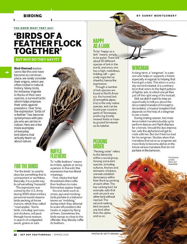Get_Out_Birding.jpg
