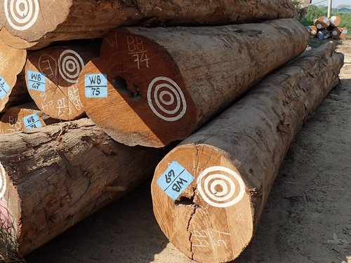 Teak logs with stamps and markings