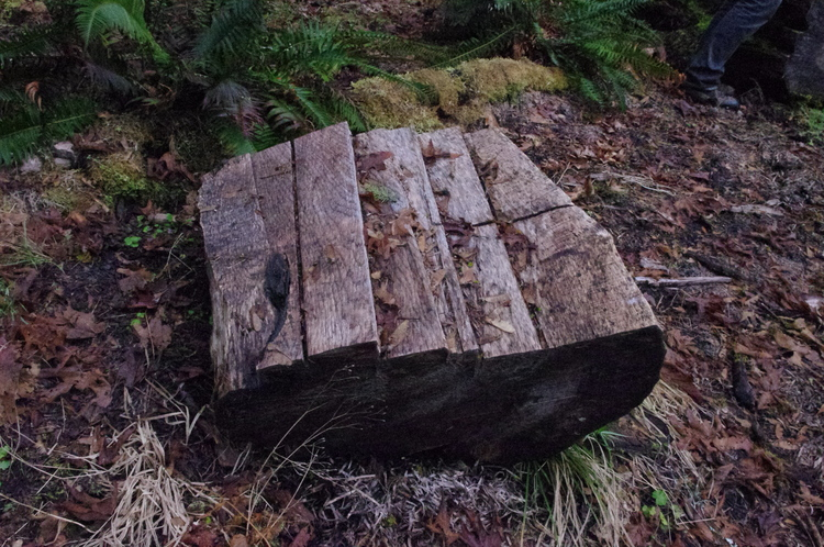 """One of the popular sites in Gifford Pinchot National Forest amongst illegal loggers is known as """"The Slaughterhouse"""". Illegal loggers usually cut the logs up in the forest and take only the figured blocks with them, leaving the rest of the log behind, as pictured. Photo credits: Double Helix Tracking Technologies"""