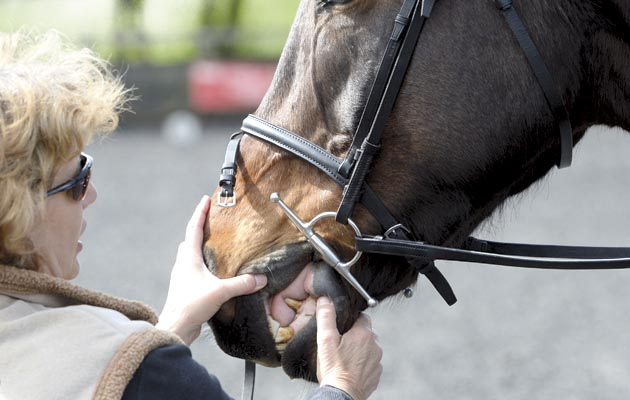 Correct bit fitting is just one aspect for a happy horse. The kind of bit used also is important when it comes to the show ring.