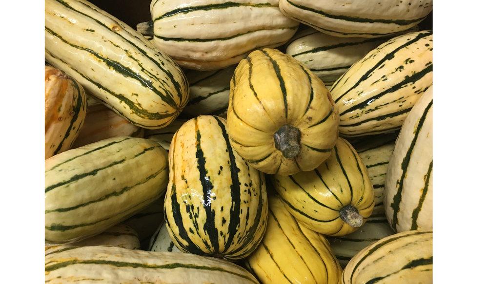 Sunny Harvest Farms - 103065B - Delicata Squash - 9.26.18 - P1.jpg