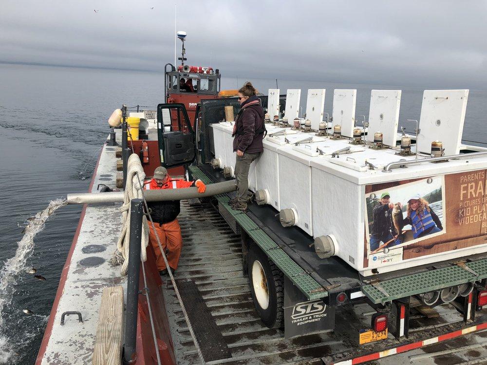 fish stocking, Lake Ontario, DEC, Seaway Marine Group