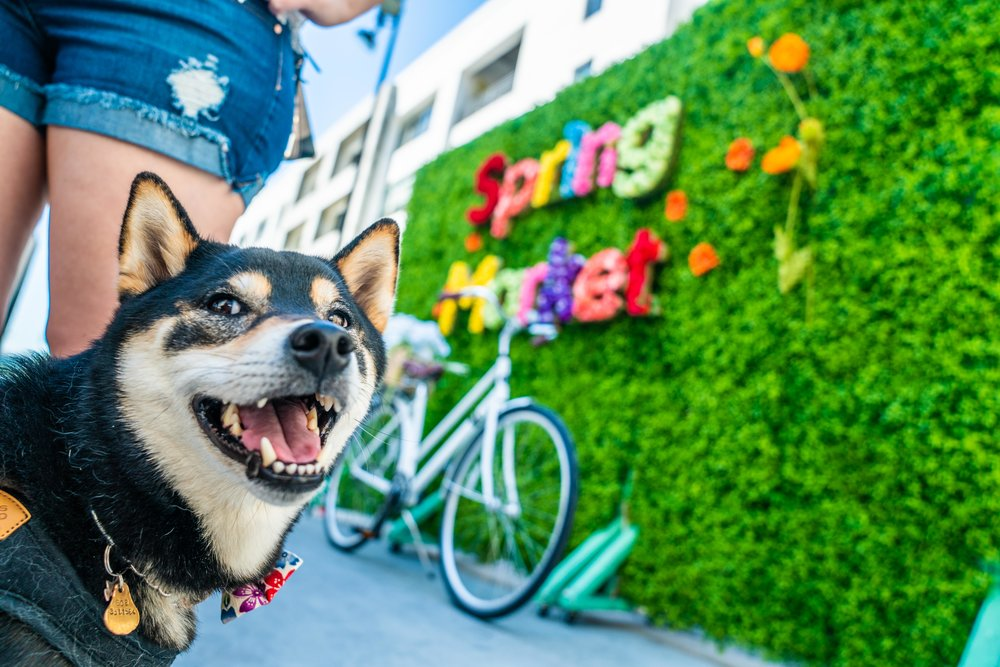 Dog Friendly - Bring your dog and tell them to invite their friends.