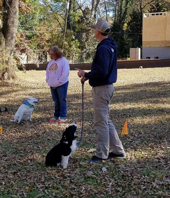 At Queen City Canine we recognize the importance of a dog's ability to socialize within a pack. -