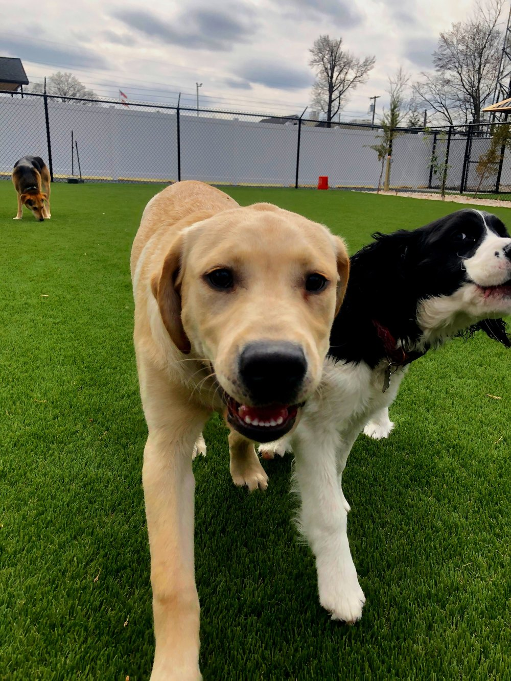 Doggie day care is a fun and simple way for your dog to gain socialization skills and get plenty of exercise in three different yards! -