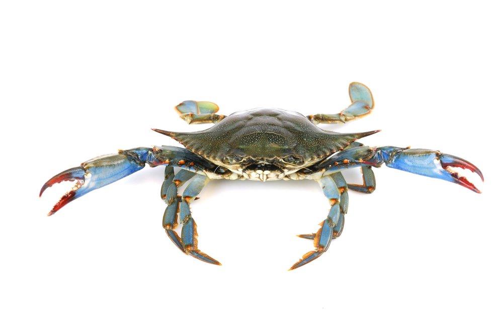 Crab microbiome