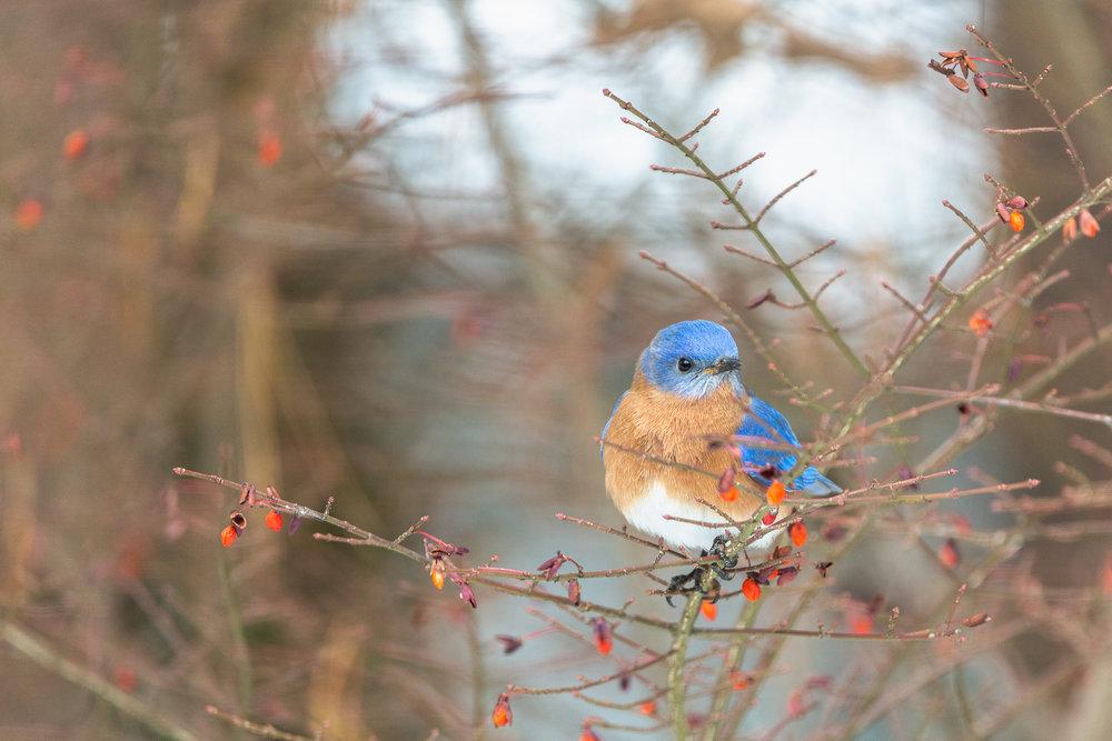 Birds - and Wildlife