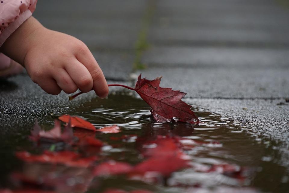 puddle leaf.jpg