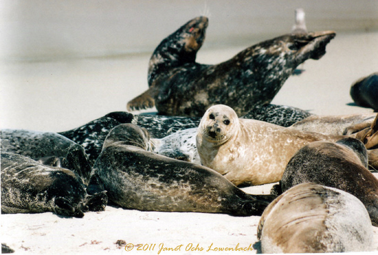 Close-up-shot-of-seals-off-the-coast-of-California.jpg