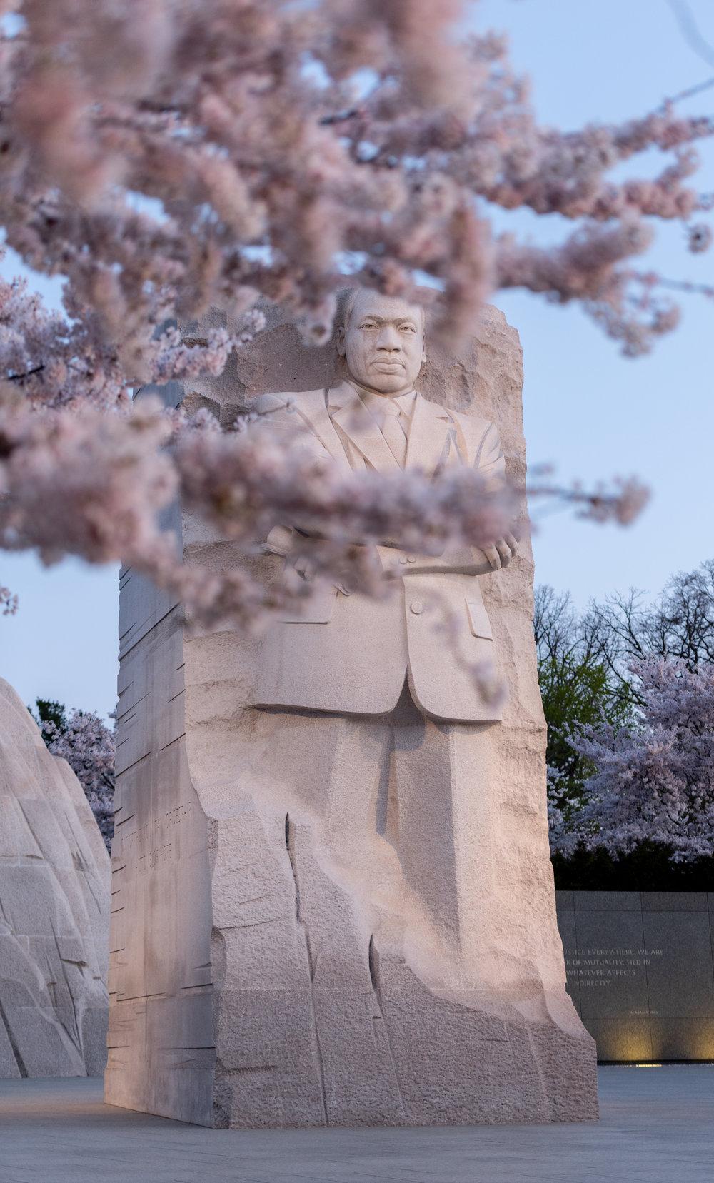 MLK and Cherry Blossom.jpg