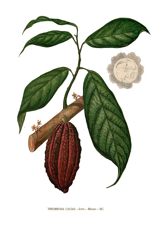 Illustration    by Francisco Manuel Blanco /    Wikimedia Commons