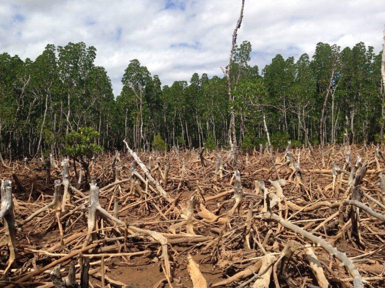 Avskoging - Skoger over hele verden forsvinner i alarmerende fart. Forskere antar nå at avskogningsraten tilsvarer et tap på 48 fotballbaner hvert minutt. Les mer her.