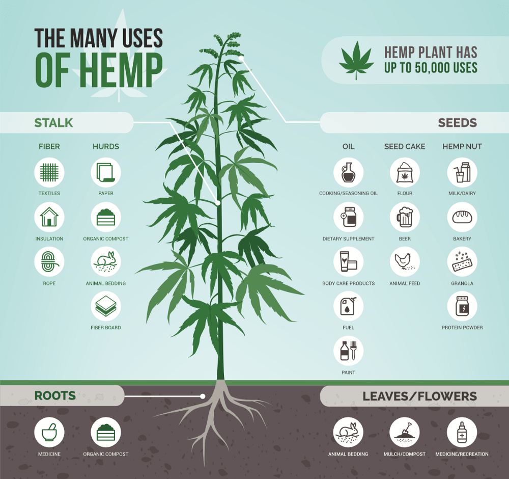 Digital infographic source unknown, but the original hemp poster can be credited and ordered from the National Hemp Association.
