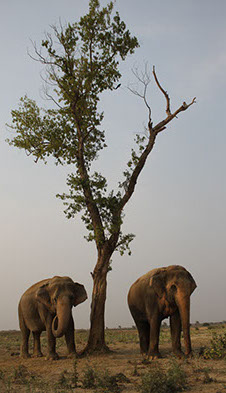Two Elephants & Tree.jpg