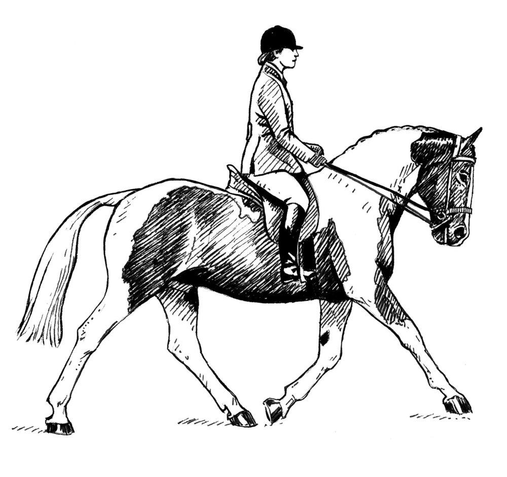 Coloured Horse Class