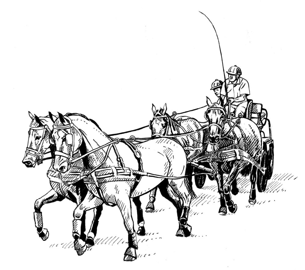 International Carriage Driving