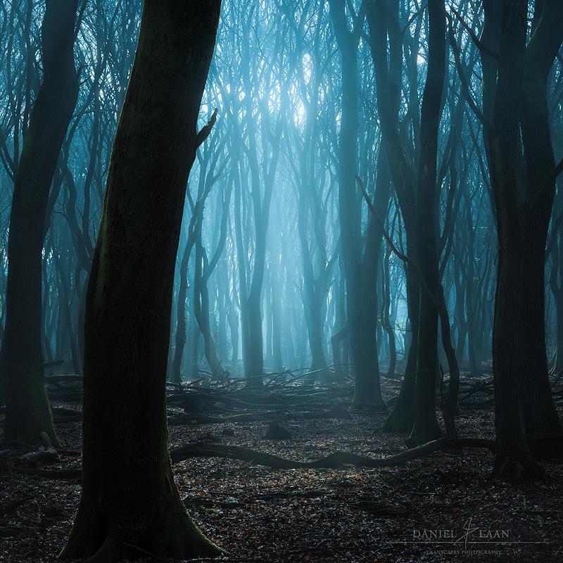 Glade-of-Wandering-Souls.jpg